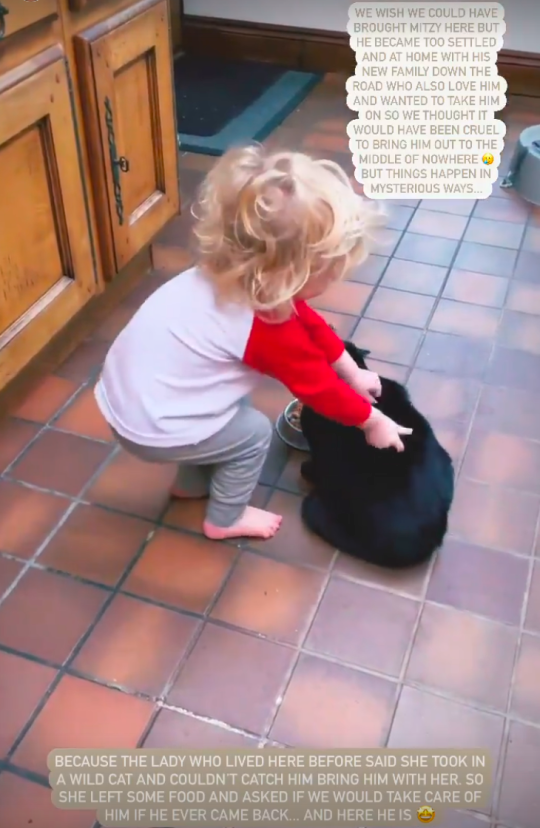 Stacey Solomon's son Rex playing with new cat