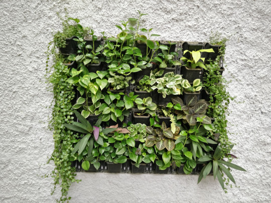 a fixture with plants on a wall