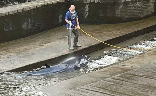 Picture taken with the permission from the twitter feed of Jake Manketo of a small whale, believed to be a Minke whale, being hosed down after it stranded at Richmond Lock and Weir on Sunday along the River Thames in south-west London. Issue date: Sunday May 9, 2021. PA Photo. See PA story ANIMALS Whale. Photo credit should read: Jake Manketo/PA Wire NOTE TO EDITORS: This handout photo may only be used in for editorial reporting purposes for the contemporaneous illustration of events, things or the people in the image or facts mentioned in the caption. Reuse of the picture may require further permission from the copyright holder.