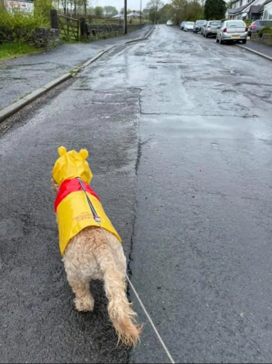 Primark are now selling rain coats for your dog