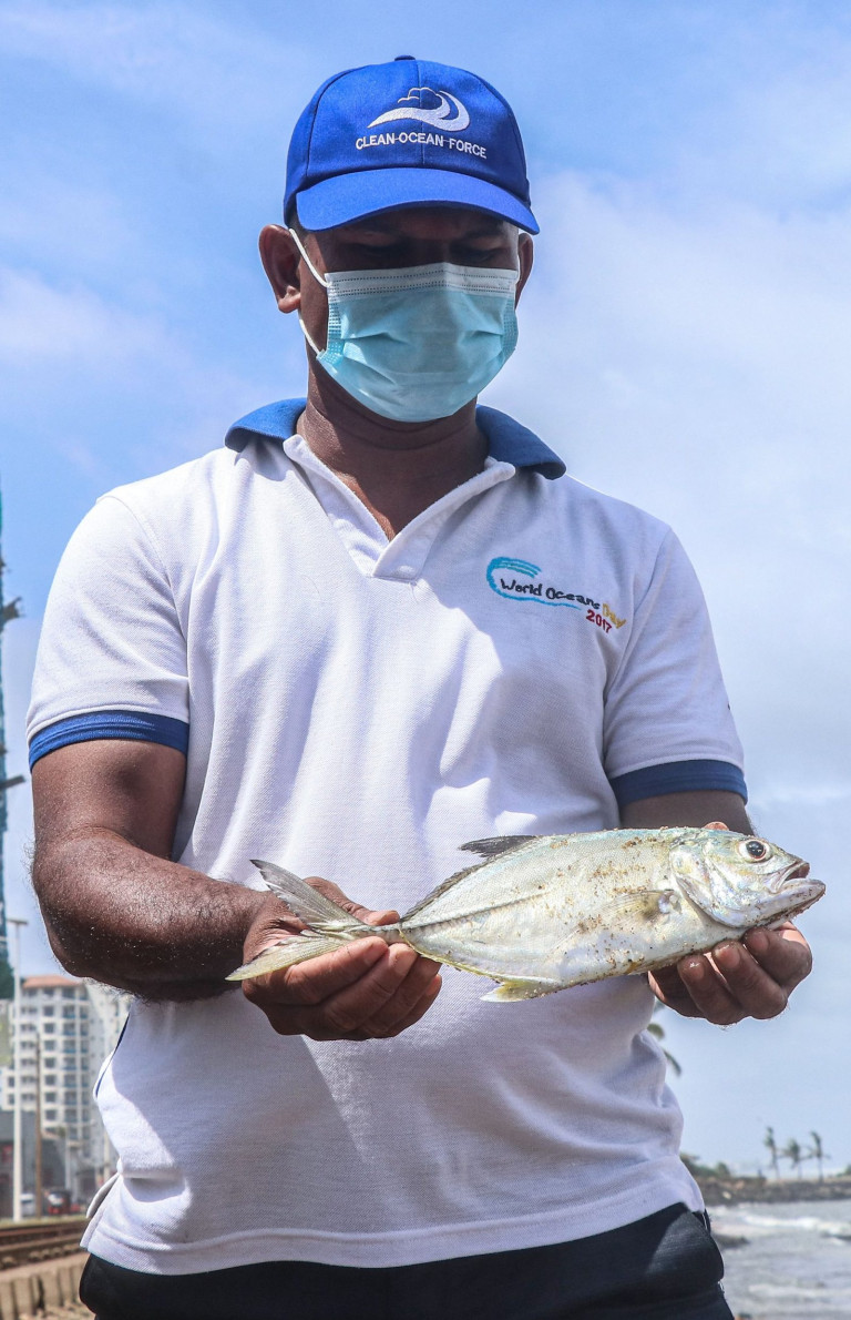 Mandatory Credit: Photo by Saman Abesiriwardana/Pacific Press/Shutterstock (11986878f) A dead fish, which had been washed ashore on beach near Wellawatta in Colombo, whose mouth containing plastic debris allegedly got into the ocean water from the Singaporean ship MV X-Press Pearl, which had caught fire near Colombo harbour last week. MV X-Press Pearl Ship environmental disaster in Sri Lanka, Colombo, Western - 31 May 2021