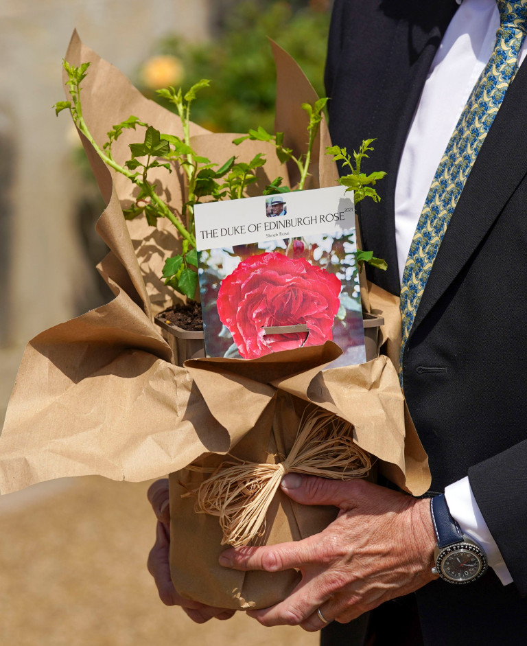 EMBARGOED TO 2200 WEDNESDAY JUNE 9 Queen Elizabeth II receives a Duke of Edinburgh rose, given to her by Keith Weed, President of the Royal Horticultural Society,, at Windsor Castle, Berkshire. The newly bred deep pink commemorative rose from Harkness Roses has officially been named in memory of the Duke of Edinburgh. A royalty from the sale of each rose will go to The Duke of Edinburgh's Award Living Legacy Fund which will give more young people the opportunity to take part in the Duke of Edinburgh Award. Picture date: Wednesday June 2, 2021. The Duke, who died in April this year, would have celebrated his 100th birthday on June 10th. PA Photo. See PA story ROYAL Philip. Photo credit should read: Steve Parsons/PA Wire
