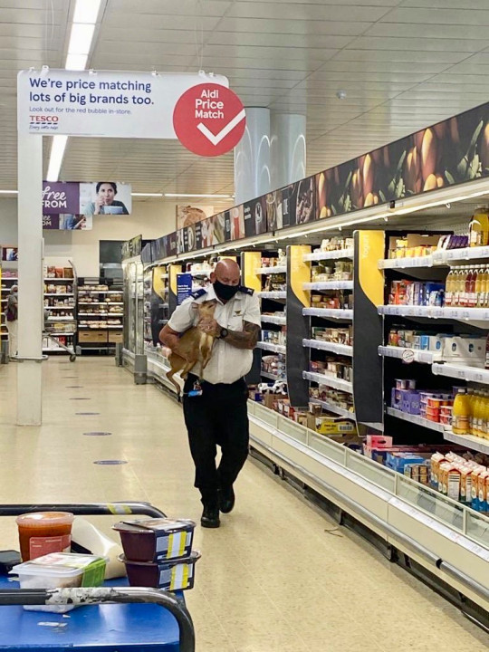 The security guard remained 'cool as a cucumber' as he carefully held the deer and took it outside of the Tesco in Norfolk
