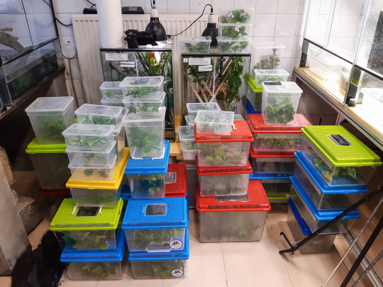 Boxes of plants and chameleons.   Dozens of rare chameleons that were previously smuggled into Austria have had offspring at Vienna Zoo.