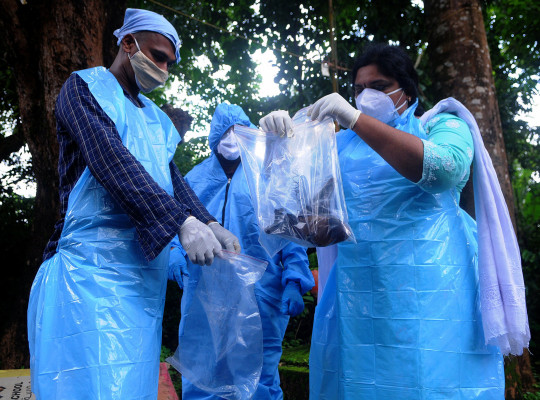 Officials deposit a bat into a Plastic bag after catching it on September 07, 2021 in Kozhikode, India.